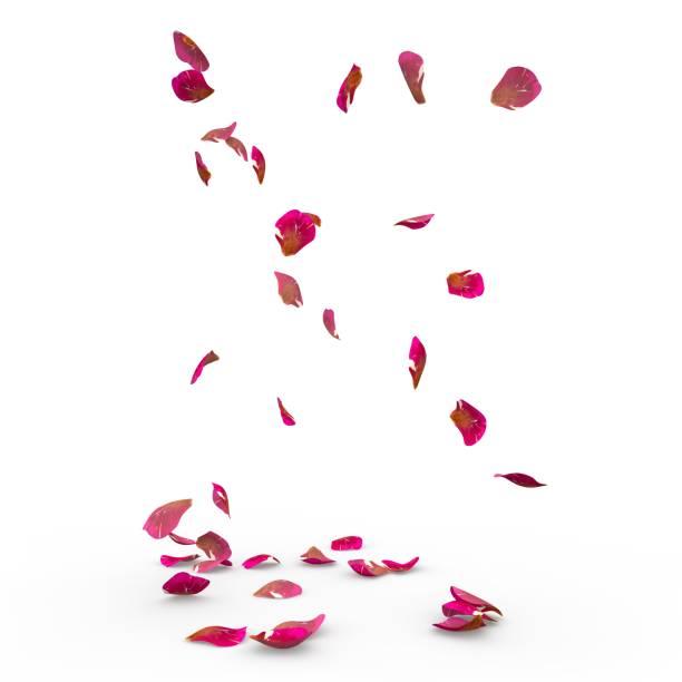Rose petals fall to the floor picture id926189588?b=1&k=6&m=926189588&s=612x612&w=0&h=lwi7tphhnwnb8mpt0x3zagp6p6u w ppjzdcnngmovm=