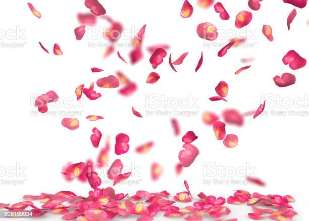 Rose petals fall to the floor picture id926199934?b=1&k=6&m=926199934&s=612x612&h=z0exgac9cpyithts73mm6p extgl89zynf2zchpebrw=