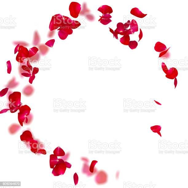 Rose petals fall to the floor picture id926264670?b=1&k=6&m=926264670&s=612x612&h=58jwdheag cr vsh1m53udjqjzpcwx0xeb71cf753d8=