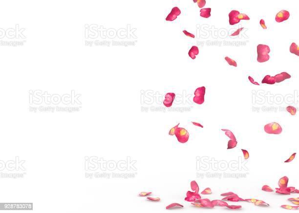 Rose petals fall to the floor picture id928783078?b=1&k=6&m=928783078&s=612x612&h=mzij7fie6nasih78vzualb8eyfylm2kobofa6tzxnna=