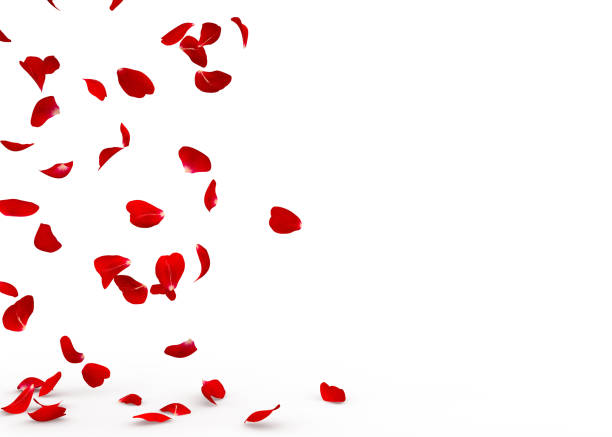 Rose petals fall to the floor picture id928783558?b=1&k=6&m=928783558&s=612x612&w=0&h=b8wgvaooskrtn eoxli9lspxqleracawtyboh3zd3wo=