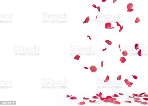 Rose petals fall to the floor picture id928786414?b=1&k=6&m=928786414&s=612x612&h=b z7cmbmxv1dmckdvm3dpdpfffyiapxyvf  xdd2cwc=