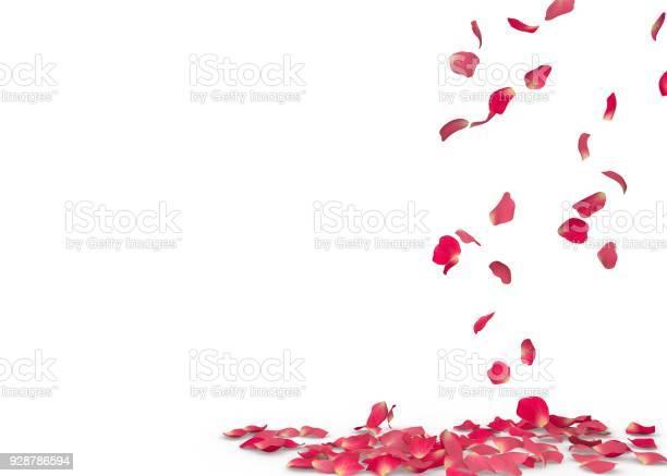Rose petals fall to the floor picture id928786594?b=1&k=6&m=928786594&s=612x612&h=y7gjouw1qdf wzy 9v44iki1bsho7wmge k1wpeeavk=