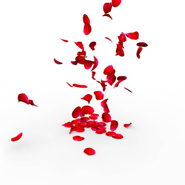 Rose petals falling on a surface picture id468473870?b=1&k=6&m=468473870&s=612x612&w=0&h=5at6lxh5fqtepprfdim7mvxvbt  eszwfeixusilu9o=