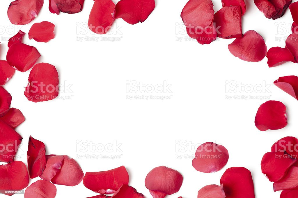 Rose petals frame stock photo