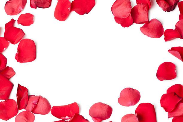 rose petals frame - rozenblaadje stockfoto's en -beelden