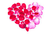 istock Rose petals Heart Shape isolated on white background 519401900