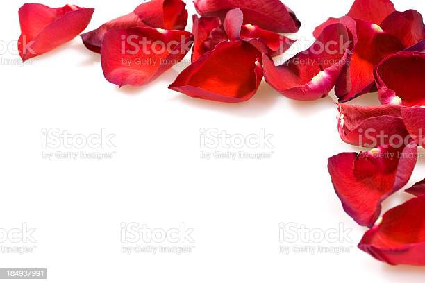 Rose petals in pattern on white picture id184937991?b=1&k=6&m=184937991&s=612x612&h=jgbizctyozkysgts7qliea8elc5lz2hwgjqupbaxazy=