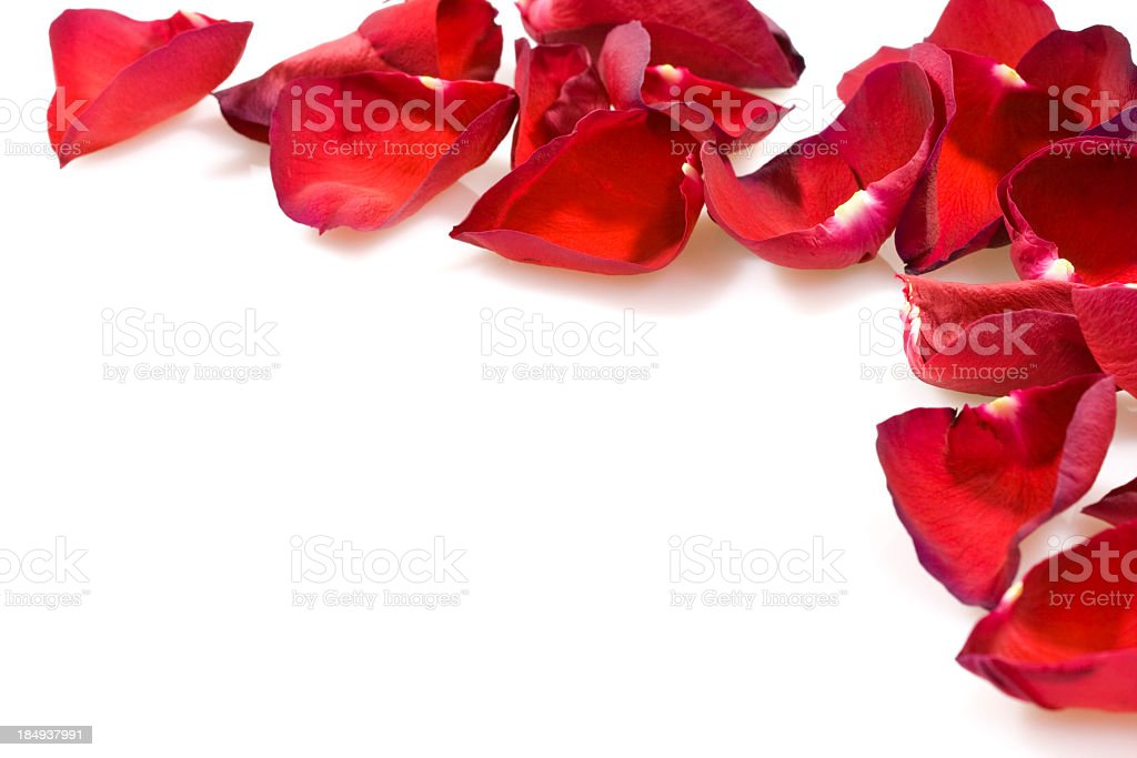 Rose petals in pattern on white stock photo