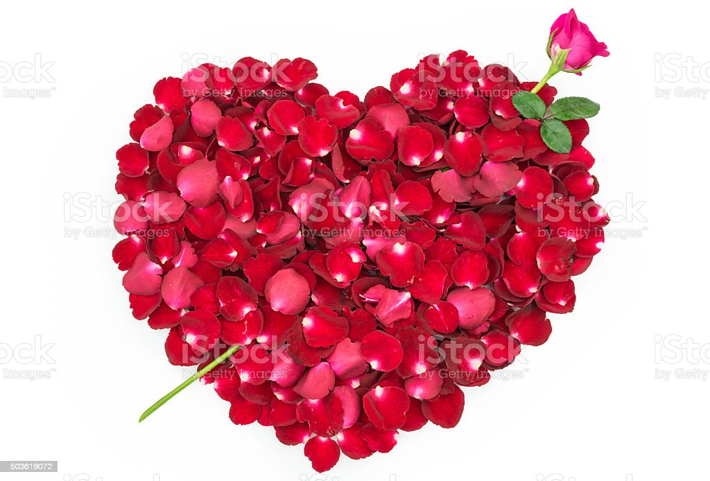Rose petals in  shape of a heart with Rose Arrow stock photo