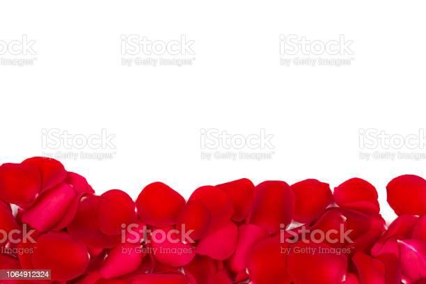 Rose petals isolated on white picture id1064912324?b=1&k=6&m=1064912324&s=612x612&h=efmhorhdgl0cqhs2gt 5rpgltgs bv49f4 ztqzuu8q=