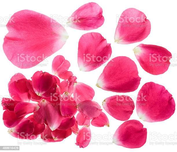 Rose petals isolated picture id488616426?b=1&k=6&m=488616426&s=612x612&h=o8a3c3wyfkhxbrldexmrgqccodspl2 okd556l4 ugo=