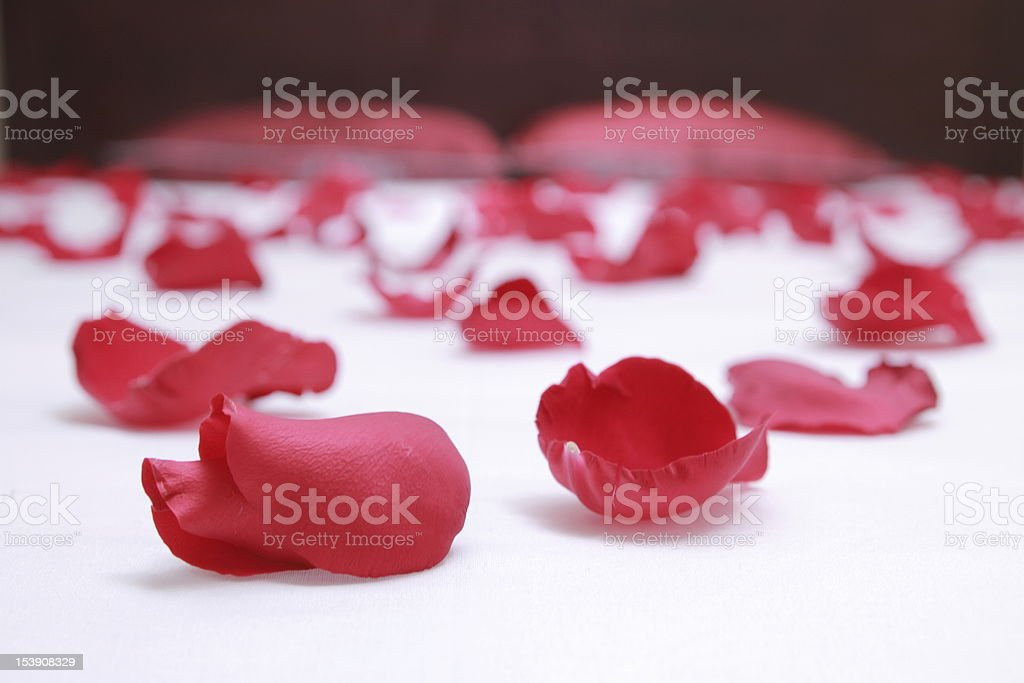 Rose petals on a bed with white sheets royalty-free stock photo