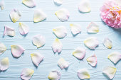 istock Rose petals on a blue wooden background. 585081852