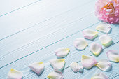 istock Rose petals on a blue wooden background. 585081988