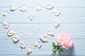 istock Rose petals on a blue wooden background. 585082204