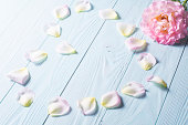istock Rose petals on a blue wooden background. 585082282