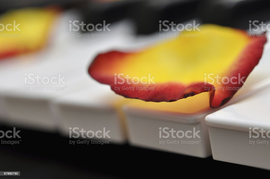 Rose Petals on Piano royalty-free stock photo