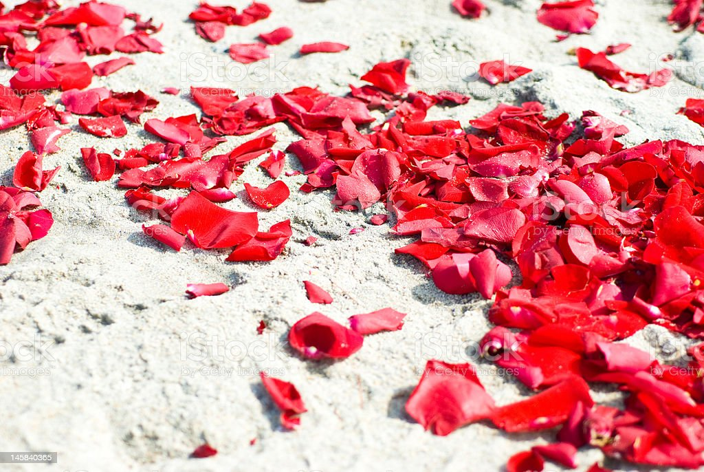 Rose Petals on the Sand stock photo