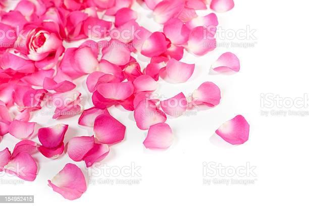 Rose petals on white picture id154952415?b=1&k=6&m=154952415&s=612x612&h=dzrkupkqpxw rwkrzm9zyrujx3o8igc7sv0mjbzethw=