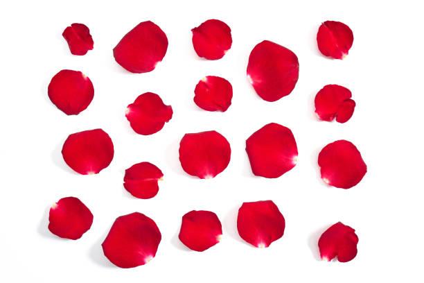 Rose petals picture id1139534376?b=1&k=6&m=1139534376&s=612x612&w=0&h=34tjipfxgy42drd9csriujvat7nfu2nw6datlmnlm5y=