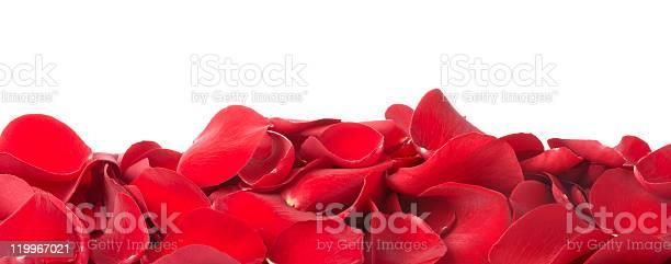 Rose petals picture id119967021?b=1&k=6&m=119967021&s=612x612&h=izvqk0pqfhb9xralj7ddmbpwmxqjkqgnrhqxrfaxonu=