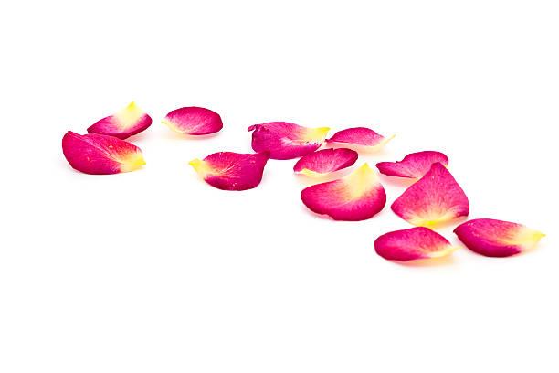 Rose petals picture id134155948?b=1&k=6&m=134155948&s=612x612&w=0&h=x kswtwv2snnxfydwcmgn7ovfc9i1nn9 iruf2e6 cm=