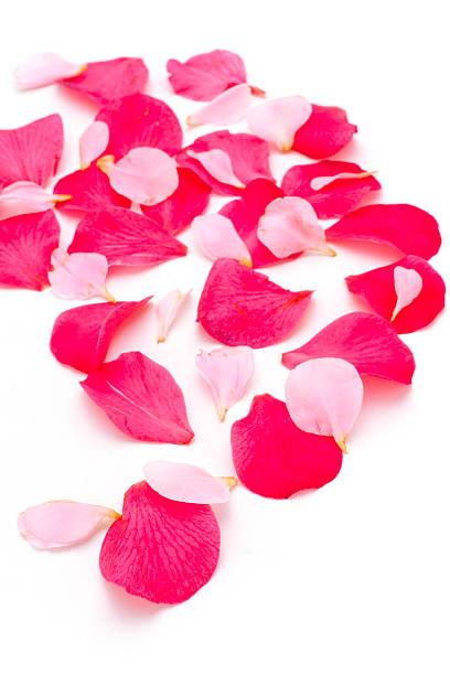 Rose petals picture id136757098?b=1&k=6&m=136757098&s=612x612&w=0&h=l5ipanrli uqstu6ferivfxq slkd8gwquv53oul6fy=