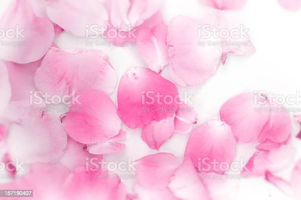 Rose petals picture id157190407?b=1&k=6&m=157190407&s=612x612&h=usonc0oo2s87poofckf2daab50y3rgu2pdj nz8qj2i=