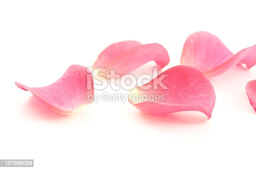 istock Rose petals 157568059