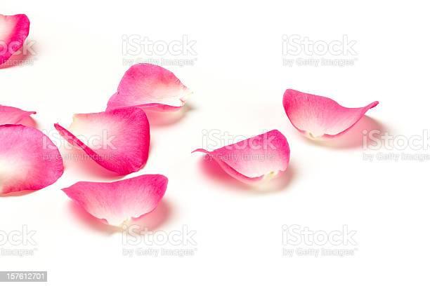Rose petals picture id157612701?b=1&k=6&m=157612701&s=612x612&h=idjxcnpfx6rsxfs gzrqzmigynlwbgxrrytbr8 jm7o=