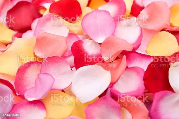 Rose petals picture id174627034?b=1&k=6&m=174627034&s=612x612&h= n7ooroaa4agic1dm8l9xrsuef6kyeolqnzvxalke i=