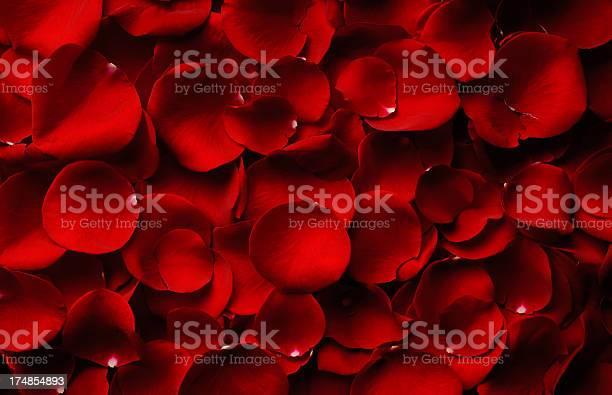Rose petals picture id174854893?b=1&k=6&m=174854893&s=612x612&h=50pitmwejfcfvs6xx1luxfcwjojhlcsjojw2bu0yjmo=