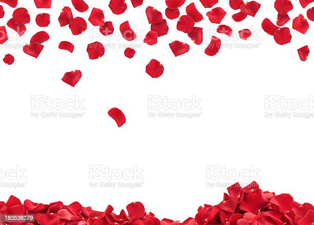 Rose petals picture id183538279?b=1&k=6&m=183538279&s=612x612&h=ctc7l3riaakyj0gggmhtqwqd po2ulydciaz3eqkwau=