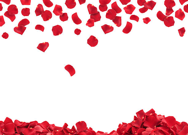 rose petals - rose petals stock pictures, royalty-free photos & images