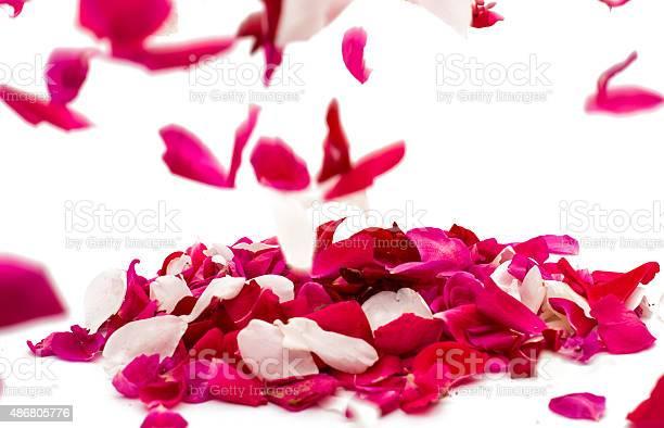 Rose petals picture id486805776?b=1&k=6&m=486805776&s=612x612&h=acbrtg5ooghpk lz6ysfoq5x1ftl91tdof8jeyobloa=