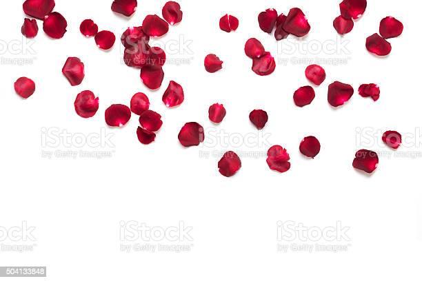 Rose petals picture id504133848?b=1&k=6&m=504133848&s=612x612&h=y4tutadf2yvwbyodn4je yac4l e1dl57six6zy9zfk=