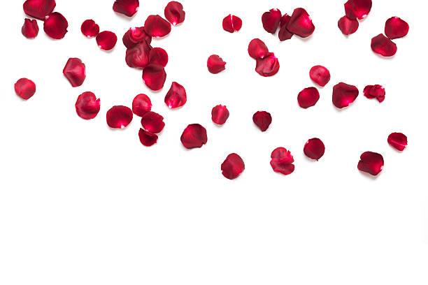 Rose petals picture id504133848?b=1&k=6&m=504133848&s=612x612&w=0&h=5i52gzpdjh6cfjv2 4p5l8 bjdqb6ihtsjsenmmuwbo=