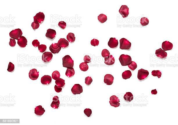 Rose petals picture id531692821?b=1&k=6&m=531692821&s=612x612&h=fgefafxu8528ljah eysdz6m21e3r4 fmyp5fqjbpwy=