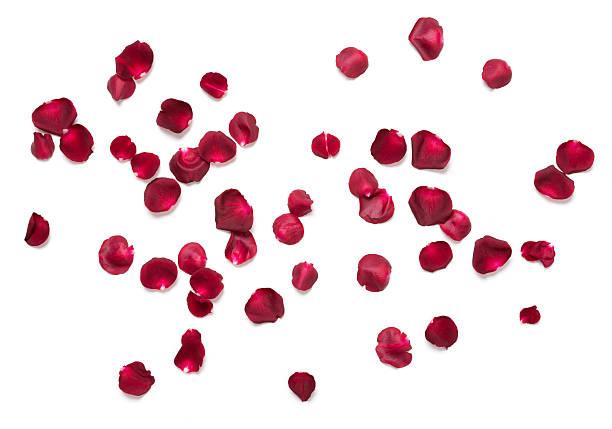 Rose petals picture id531692821?b=1&k=6&m=531692821&s=612x612&w=0&h=q7tlpyaczji8f8yn3kln l7ajvepnb9ttxhvou0rdju=