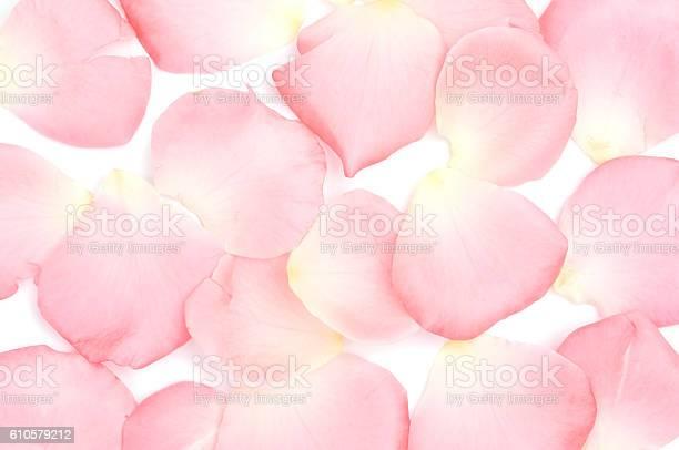 Rose petals picture id610579212?b=1&k=6&m=610579212&s=612x612&h=w9zqftwb8xuczkddvzgevug 0ejx9o84thanob 9tk8=