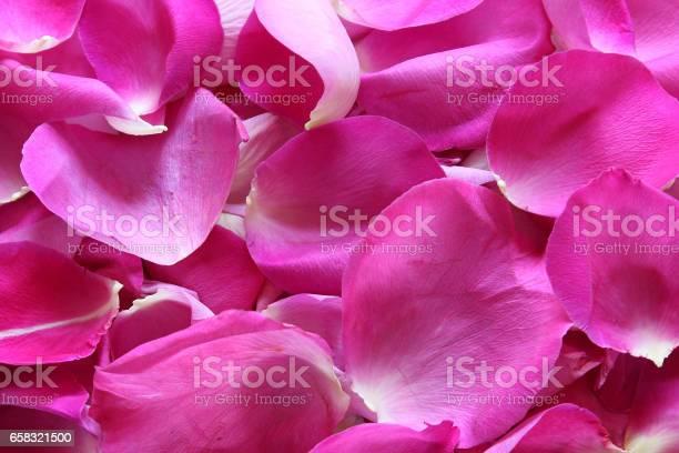 Rose petals picture id658321500?b=1&k=6&m=658321500&s=612x612&h=gibxddpdzlyr3ci38vj8q5ee02 oousdjddf5ouf7 m=