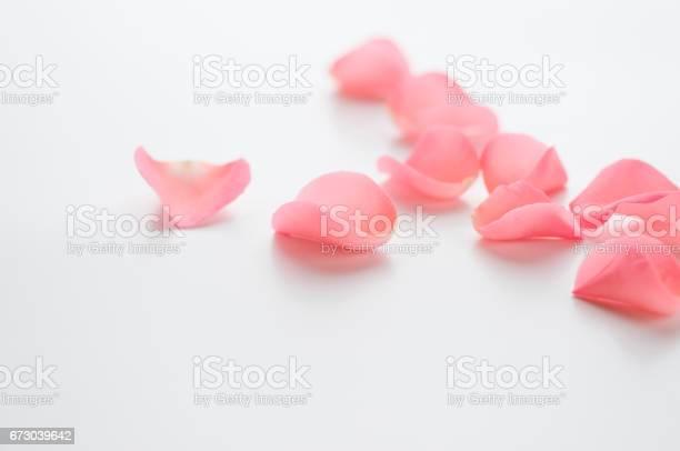 Rose petals picture id673039642?b=1&k=6&m=673039642&s=612x612&h=vbgtwosvibnnhygwdw4pfjp zid3b7nwbzitqkr6u o=