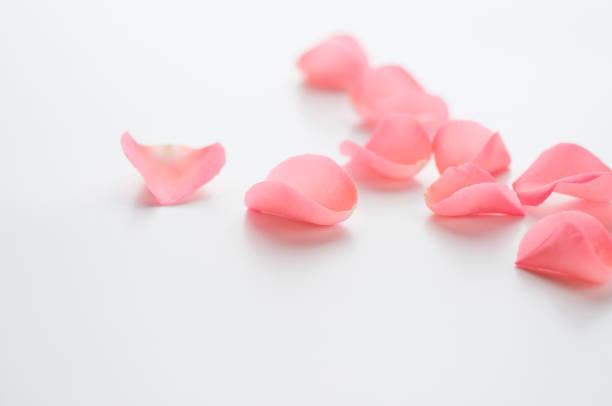 Rose petals picture id673039642?b=1&k=6&m=673039642&s=612x612&w=0&h=azmluzvo13qrcilwjmjq3xsehcyelbxitln2hwtk0 k=