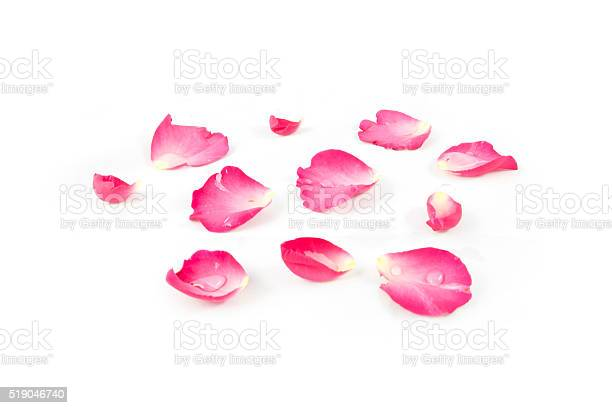 Rose petals pink isolated on white background picture id519046740?b=1&k=6&m=519046740&s=612x612&h=ncrmqmeqgxchbfx k2hdoiyejmcmszyyese6tzbqply=