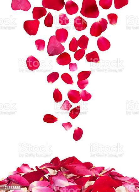 Rose petals rain picture id171383885?b=1&k=6&m=171383885&s=612x612&h=acm8gcngw9cze53dr5pfhrndrujzwwjau6fvvoeef u=