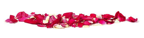 Rose petals row xxxl picture id471416869?b=1&k=6&m=471416869&s=612x612&w=0&h=oyscrhhb mutbkyndtcfriett4v71pbftihvirflvzi=