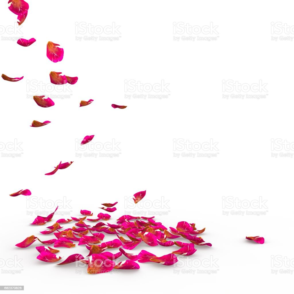 Rose petals speckled fall on the floor royalty free stockfoto