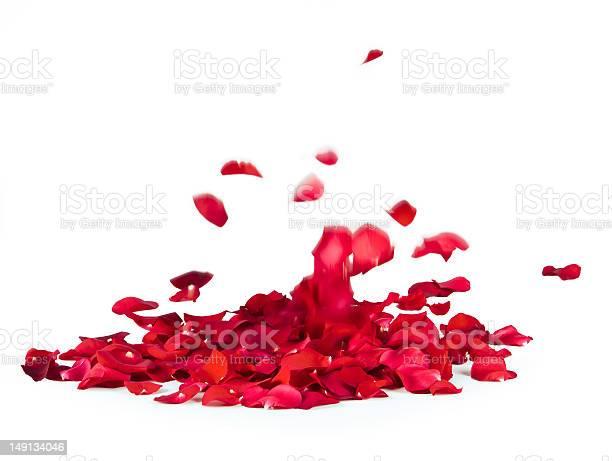 Rose petals spread in a blank background picture id149134046?b=1&k=6&m=149134046&s=612x612&h=uibhro13unqm gjca87qq3 b2rrmgs92r  y5wopbre=