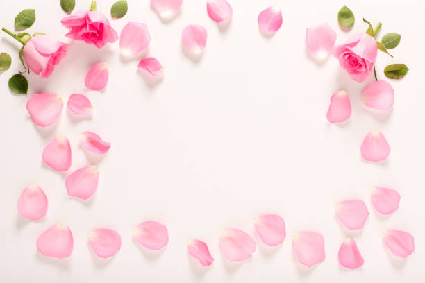 rose - rose petals stock pictures, royalty-free photos & images